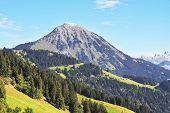 Gorgeous weather in the Swiss Alps. Green meadows and pine forests on the mountain slopes