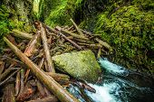 image of dam  - Natural Logs Dam on the Small Canyon River in Oregon Columbia Gorge Area - JPG