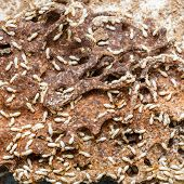 stock photo of ant  - Close up damaged paper eaten by termite or white ant - JPG
