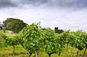 stock photo of bordeaux  - Vineyards and countryside in Summer near Bordeaux - JPG