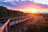 picture of costa blanca  - Sunrise on pine forested Santa Pola beach Costa Blanca Spain - JPG