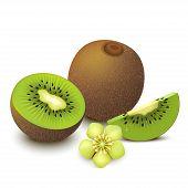 picture of backround  - fresh fruit kiwi vector isolated on white backround with flower - JPG