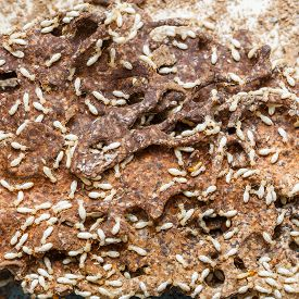 picture of excrement  - Close up damaged paper eaten by termite or white ant - JPG
