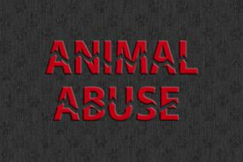 image of animal cruelty  - Stop animal abuse  - JPG