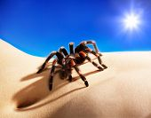 stock photo of bodyscape  - bodyscape with spider under blue sky and sun - JPG