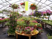 Greenhouse Plants And Flowers