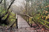 Rustic Wooden Bridge