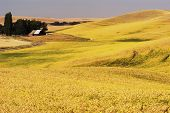 Palouse Country 3