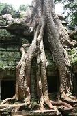 Ancient Temple Of Ta Prohm poster