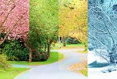 A composite collage of four image of the same street lined with cherry trees, photographed in all fo poster