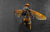 Wasp on mosquito net against dark background poster