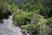 Alum Cave Bluffs Trail