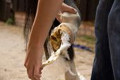 Poultice removal