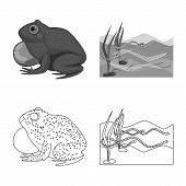 Vector Design Of Wildlife And Bog Icon. Collection Of Wildlife And Reptile Stock Symbol For Web. poster
