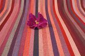 Flor violeta sobre un fondo rayado