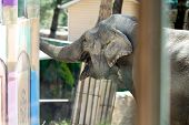 Poor Elephant In The Zoo Over The Glass In The Small Enclosure poster