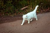 White Homeless Beautiful Cat Walking Down The Road, Staring And Squinting, Close Up. A Lonely Stray  poster