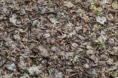 Fallen Leaves In Spring. Texture Of Dry Leaves. Natural Texture poster