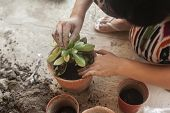 Female Planting Home Plants. Young Middle Eastern Woman Planting Flower In The Pot. Girl Gardening.  poster