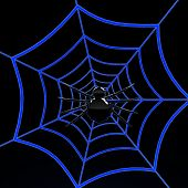 Black spider on blue web