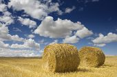 Two golden hay bales in the countryside on a perfect sunny day (autumn season)