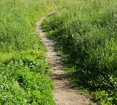 A Path In The Tall Green Grass poster