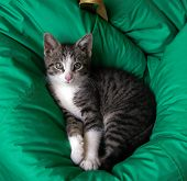 Cute Kitty Lying On A Pillow, Just Woke Up. poster