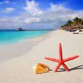 beach with starfish and seashell in white sand and tropical hut