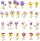 Collection of hand-drawn pansy