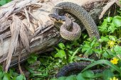 stock photo of green whip snake  - The Snake in natural habitat  - JPG