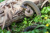 stock photo of green whip snake  - The Snake in natural habitat  - JPG