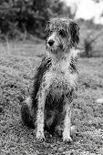 Wet Domestic Dog poster