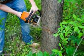 picture of cutting trees  - closeup of chainsaw cutting into a tree - JPG