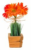 Bouquet Of Gerbera Daisy