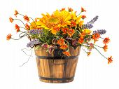 stock photo of creeping  - Bouquet of sun flower in wood bucket isolated on white - JPG