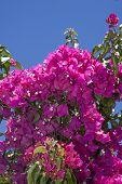 Crete flowers