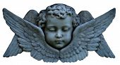 foto of cherub  - A cherub face with wings - JPG