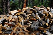 The Large Woodpile poster