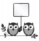 Owls Blank Sign