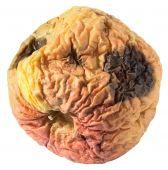 Rotten apple nojento seco isolado no branco