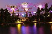 Gardens by the Bay at night. Singapore