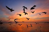stock photo of flock seagulls  - Seagulls are flying during sunset at Bangpoo Thailand