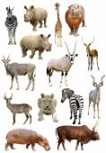 picture of african animals  - african animals collection isolated on white background - JPG