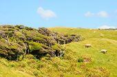 New Zealand Inshore Landscape