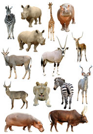 stock photo of eland  - african animals collection isolated on white background - JPG