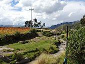 Campi di Quinoa, Arequipa, Perù