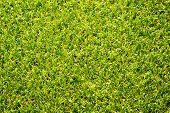 The fake grass texture.