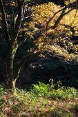 Stunning Vibrant Autumn Landscape Of Forest