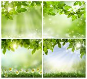 a set of photos of spring backgrounds