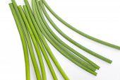 garlic allium or leek